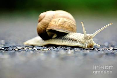 Popstar And Musician Paintings Royalty Free Images - Side view up of europaean vineyard snail Royalty-Free Image by Pis Ces
