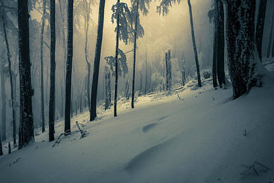 Patriotic Signs - Silent Wood by Evgeni Dinev