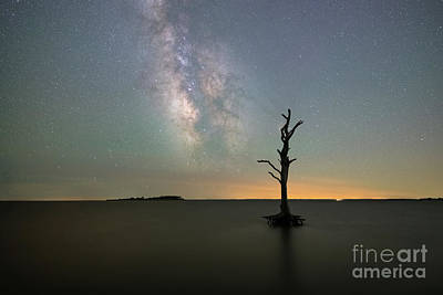 Vintage Movie Stars Royalty Free Images - Silhouette Of A Tree Under The Stars  Royalty-Free Image by Michael Ver Sprill