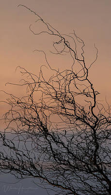 Photograph - Silhouetted Bare Tree Branches, Poulsbo Waterfront, Washington State, 7361 by Wally Hampton