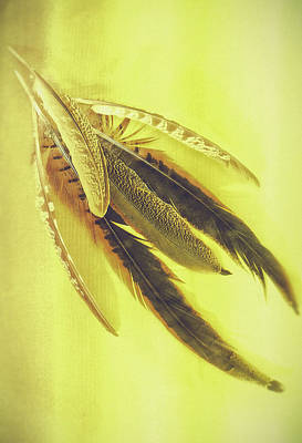 Royalty-Free and Rights-Managed Images - Six Pheasant Feathers Against A Plain Yellow Background by David Ridley