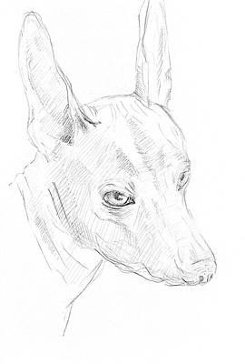 Drawings Royalty Free Images - Sketch Dog 1 Royalty-Free Image by Masha Batkova
