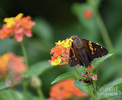 Spot Of Tea Royalty Free Images - Skipper In The Garden Royalty-Free Image by Skip Willits