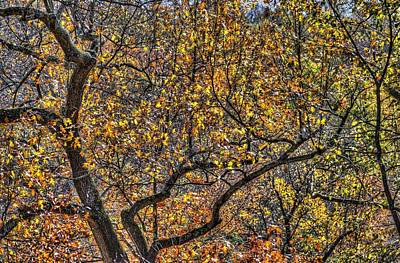 Royalty-Free and Rights-Managed Images - Sleepy Hollow Autumn Colours by David Pyatt