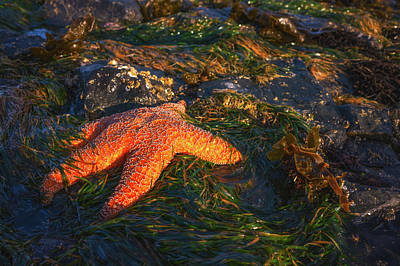 Bath Time Rights Managed Images - Sleepy Starfish Royalty-Free Image by Darren White