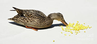 Photograph - Snack Time for Mama Duck by Michele Burgess