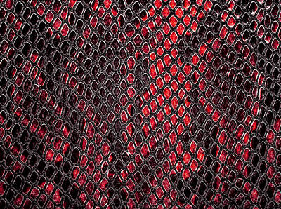 School Teaching - Snake skin, can use as background by Julien
