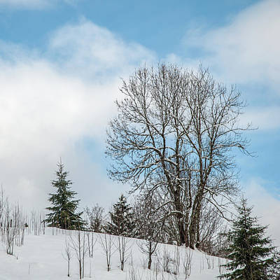 Aloha For Days - Snow Beauty by Rob Hemphill