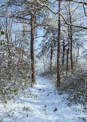 Photograph - Snow-covered forest by Brandon Adkins