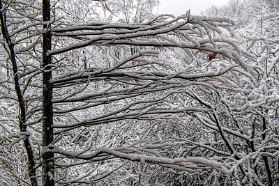 Rights Managed Images - Snow covered limbs stretching out Royalty-Free Image by Dan Friend