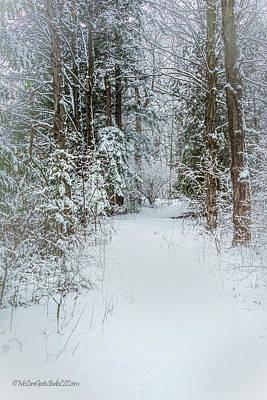 Photograph - Snow covered pine path by LeeAnn McLaneGoetz McLaneGoetzStudioLLCcom