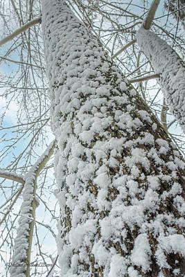 Photograph - Snow covered tree trunks  by LeeAnn McLaneGoetz McLaneGoetzStudioLLCcom