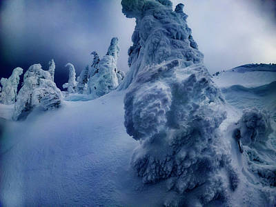 Royalty-Free and Rights-Managed Images - Snow Covered Trees 5 by Pelo Blanco Photo