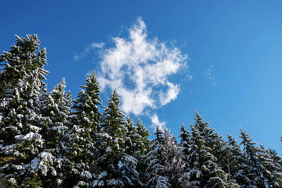 Royalty-Free and Rights-Managed Images - Snow Covered Trees and Cloud by Pelo Blanco Photo