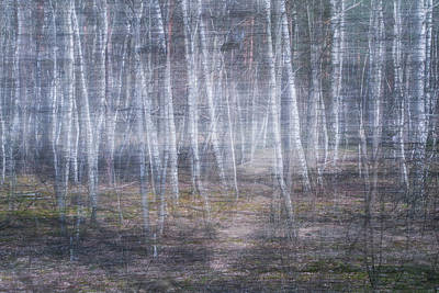 Photograph - Snow Forest by Julia Chodor