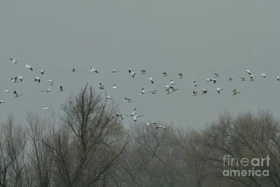 Comic Character Paintings - Snow Geese in the Sky by AmazingActionShots Photography