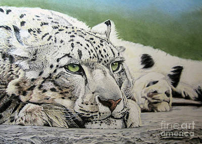 Painting - Snow Leopard by Diane Marcotte