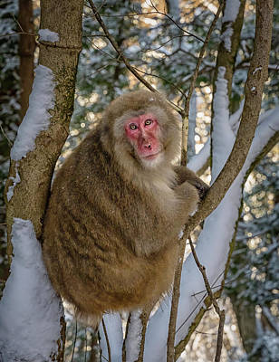 Book Quotes - Snow Monkey in A Tree by Joan Carroll