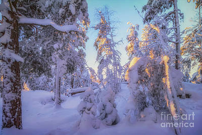Royalty-Free and Rights-Managed Images - Snowy 4 by Veikko Suikkanen