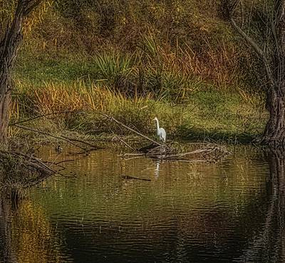 Movies Star Paintings - Snowy Egret Framed by Nature by Theresa Peterson