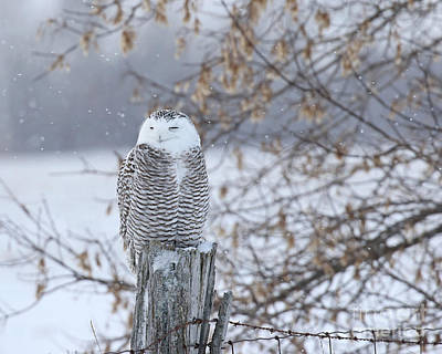 All American - Snowy by Heather King