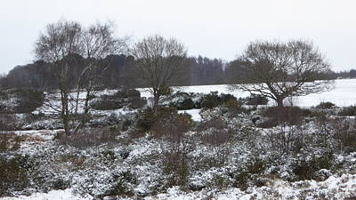 Autumn Pies - Snowy Parkland Scrub, Trees And Bushes by Richard Griffin