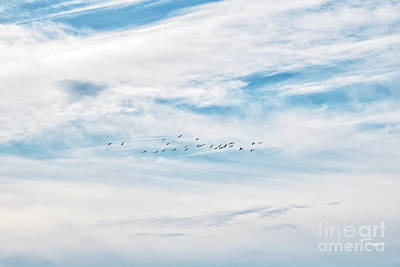 The Champagne Collection - Soaring Towards Your Destiny by Anita Oakley