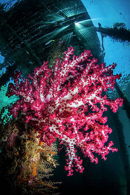 Photograph - Soft coral under jetty by Todd Winner