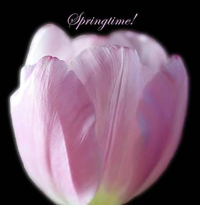 Abstract Works - Soft Light Pink Tulip On Black by Johanna Hurmerinta