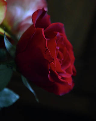 Abstract Airplane Art Rights Managed Images - Solitary Red Rose Royalty-Free Image by Whispering Peaks Photography
