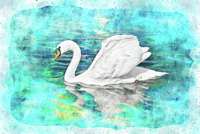 Royalty-Free and Rights-Managed Images - Solo Swan Watercolor by Carol Japp