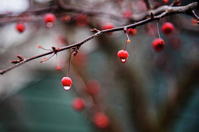 Photograph - Solstice Berries by Bud Simpson