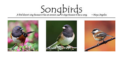 Photograph - Songbirds Poster by Brad Mitchell