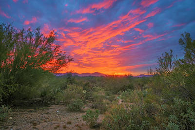 Mark Myhaver Rights Managed Images - Sonoran Sunset h2038 Royalty-Free Image by Mark Myhaver