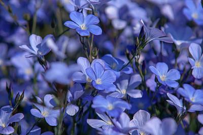 Keith Richards - Spanish Blue Flax by Jenny Rainbow
