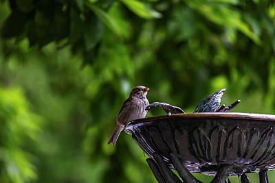 Latidude Image - Sparrow by Robert Ullmann