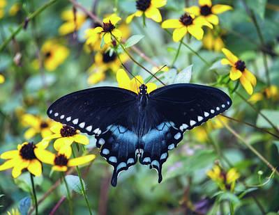 Antlers - Spicebush Swallowtail by Laura Vilandre