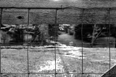 Photograph - Spider Web Black And White by Sharon Popek