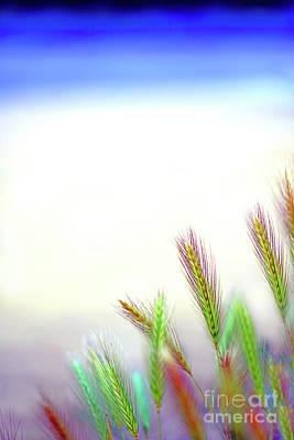 Studio Grafika Typography - Spikes of wild wheat in lush visual colors 3 by ParaKrytous P