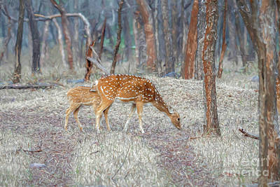 Queen Rights Managed Images - Spotted deer in the forest Royalty-Free Image by Pravine Chester