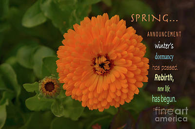 Rights Managed Images - Spring Announcement Royalty-Free Image by Debby Pueschel