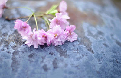 Word Signs - Spring Cherry Blossoms by Susan Maxwell Schmidt