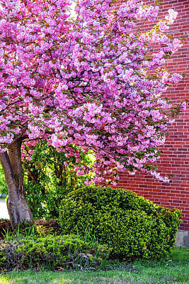 Door Locks And Handles - Spring Explosion by Greg Fortier