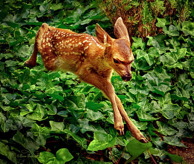 Priska Wettstein Land Shapes Series - Spring Fawn by Brian Tada
