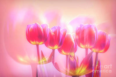 Royalty-Free and Rights-Managed Images - Spring Flower 6 by Veikko Suikkanen