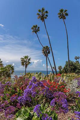 Photograph - Spring Flowers in Heisler Park Laguna Beach by Cliff Wassmann