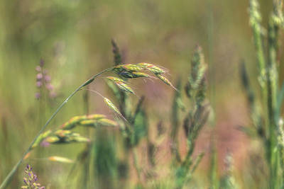 Royalty-Free and Rights-Managed Images - Spring Grass No 1 by Chris Fletcher