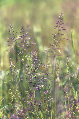 Royalty-Free and Rights-Managed Images - Spring Grass No 3 by Chris Fletcher