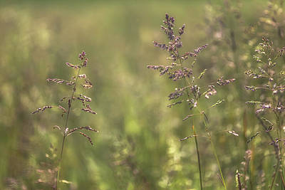 Royalty-Free and Rights-Managed Images - Spring Grass No 5 by Chris Fletcher