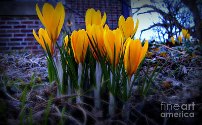 Frank J Casella Royalty-Free and Rights-Managed Images - Spring Has Sprung by Frank J Casella